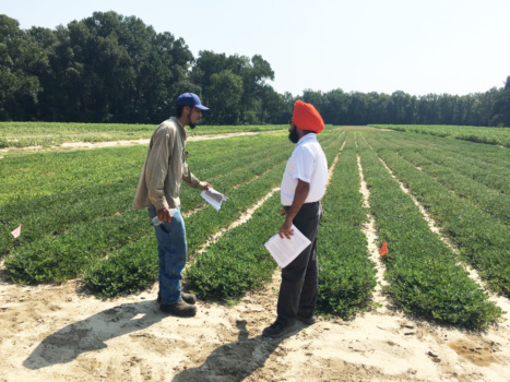 Byron Lee of Jackson, S.C. talks with Clemson soil nutrient management specialist Bhupinder Farmaha about growing peanuts.