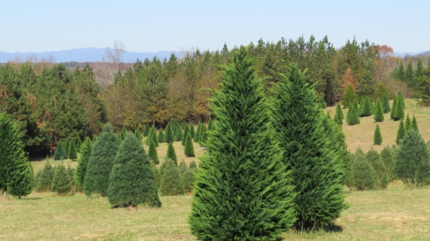 Firewood, Christmas Trees And Uninvited Holiday Guests