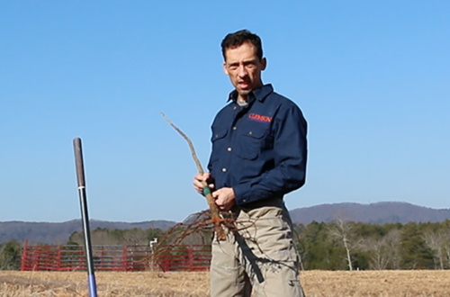 Clemson Extension senior agent Mark Arena is an expert on pecan trees.