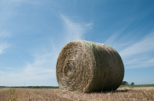 A hay bale site in a large field.