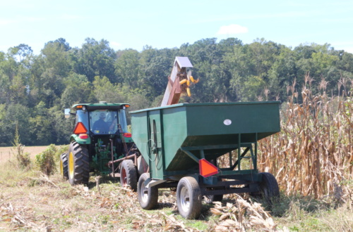 Clemson students in the Agricultural Mechanization and Business program planted, cultivated and harvested corn to sell for the Wounded Warrior Project.