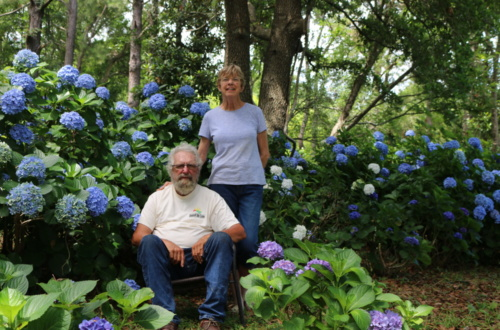 2019 S.C. Farmer of the Year Sidi Limehouse and his lifelong partner Louise Bennet grow more than 3,000 hydrangea plants to sell from their Johns Island roadside stand.